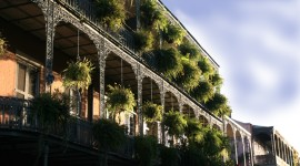 Tour the French Quarter
